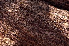 Free Wood Skin Royalty Free Stock Photos - 20530628