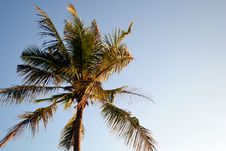 Free Coconut Tree In The Windy Day Royalty Free Stock Photos - 20530938