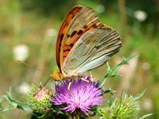 Free Butterfly Stock Images - 20534434
