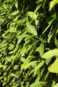 Green Leaves In The Sunshine Stock Photos