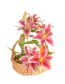 Free Lilies In A Basket Royalty Free Stock Image - 20537856
