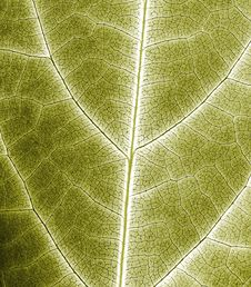 Free Abstract Leaf Closeup Stock Photos - 20539743