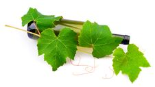 Free Wine And Grape Leaves Royalty Free Stock Photo - 20539885