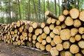 Free Timber Cuttings Royalty Free Stock Photos - 20540778