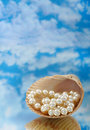 Free Elegant Pearls In Shell Stock Images - 20548654