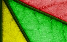 Free Multicolored Leaf Stock Photography - 20540072