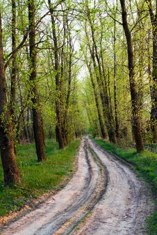 Free Road To Wood Royalty Free Stock Photos - 20540568