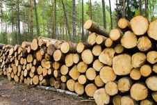 Free Timber Cuttings Royalty Free Stock Photos - 20540778
