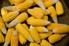 Free Corn Cob Royalty Free Stock Images - 20540909