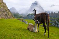 Free Machu Pichu Stock Image - 20540911