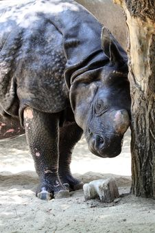 Free Rhinoceros Stock Images - 20541054