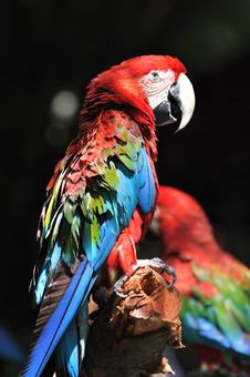 Free Portrait Of A Macaw Royalty Free Stock Photography - 20542757