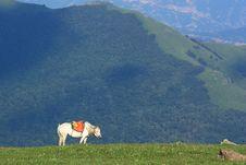 Free A White  Horse Stock Photo - 20542820