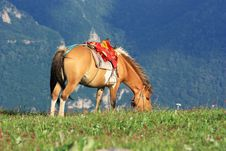 Free A Brown   Horse Royalty Free Stock Images - 20542849