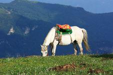 Free A White  Horse Royalty Free Stock Photos - 20542858