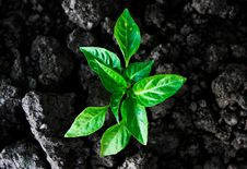 Free Plant Royalty Free Stock Photography - 20543167