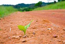Free Seedlings Along The Sidewalk Stock Image - 20543731