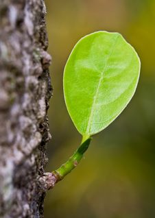 Free Tree Leaves. Stock Images - 20544064