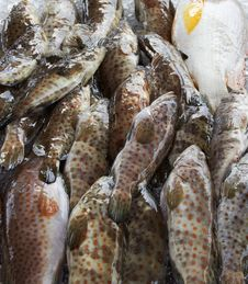 Free Fish Royalty Free Stock Images - 20544109