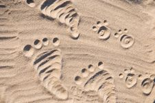 Free Footprints In The Sand Royalty Free Stock Photography - 20545087