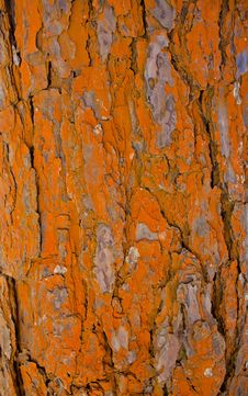 Orange Bark Pattern Stock Photos