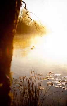 Free Sun Rise Ducks Royalty Free Stock Photo - 20546735