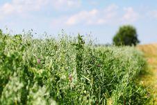 Free Green Field Stock Image - 20547171