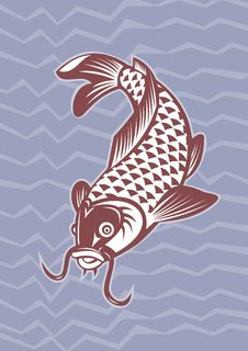 Free Koi Carp Swimming Down Royalty Free Stock Photos - 20547478