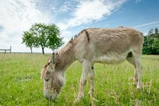 Free Donkey Stock Photo - 20547700
