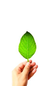 Free Beautiful Green Leaf On Hand Royalty Free Stock Photo - 20548495