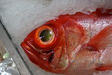 Free Fresh Fish Royalty Free Stock Photography - 20549057