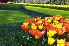 Free Field With Beautiful Flowers Stock Photography - 20549222