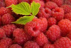Free Raspberries Background Stock Photos - 20549823