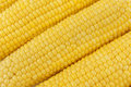Free Ears Of Corn Stock Photos - 20550303