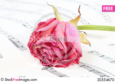 Free Wilted Rose Flower On The Music Paper Stock Photo - 20554670