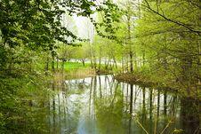 Free Small Bog Stock Photos - 20551123