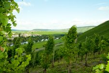 Free Moselle Valley Stock Image - 20551131