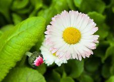 Free Spring Flowers Stock Photo - 20551150
