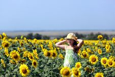 The Girl And Sunflowers Stock Photography