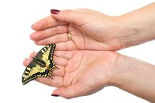 Free Butterfly Sitting On Hands Stock Photos - 20553053