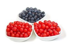 Free Blueberries And Currants Royalty Free Stock Photos - 20553608