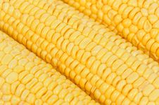 Free Yellow Corn Close-up Stock Photos - 20553703