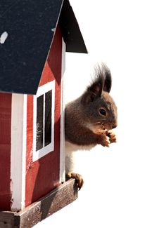 Free Squirrel At His House Stock Images - 20553714
