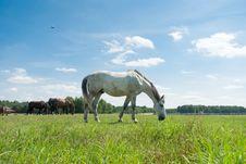 Free Horse Stock Photo - 20553810