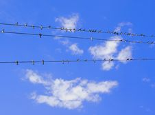 Free Swallows On Wires Royalty Free Stock Image - 20555776