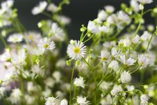 Bouquet Of White Wild Flowers Royalty Free Stock Images
