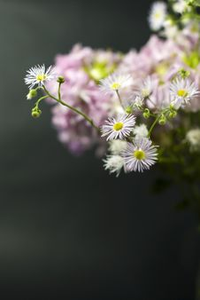 Bouquet Of White Wild Flowers Stock Photography