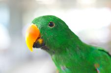 Free Closeup Green Parrot Royalty Free Stock Image - 20556826