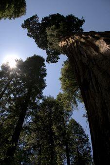 Free Trees Stock Photo - 20557100