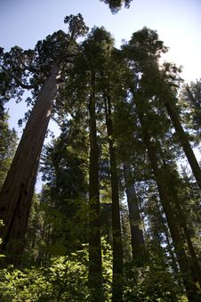 Free Trees Stock Photos - 20557143